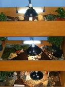 Terraria żółwi zawiasowych