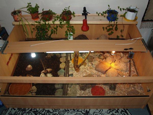 Terrarium żółwi lamparcich - rzut z góry