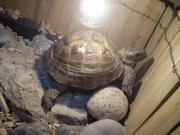 Mój żółwik :)
