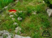 Prowizoryczny wybieg dla żółwia lądowego