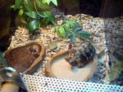 Szklany box w sklepie zoologicznym